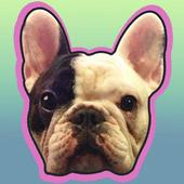 Manny the Flying Frenchie 5.0