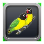 kicau love bird 1.0