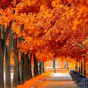 Autumn Wallpaper backgrounds 1.0.3