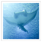 Sea Creatures - Wallpapers 1.4