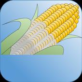 Mycotoxins 1.0