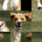 Cute Dogs 15 Puzzle 1.0