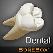 BoneBox™ - Dental Lite 1.1
