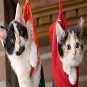 Christmas Cats wallpaper 1.0