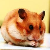 Hamster HD wallpaper 2.0