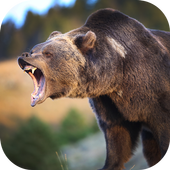 Real Bear Simulator 2017 1.0