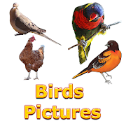 Birds Names with Pictures for Kids 2 0 APK Download - Android