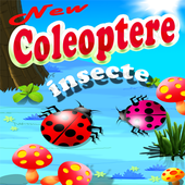 Insecte Coleoptere