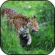 Jaguar Wallpapers 1