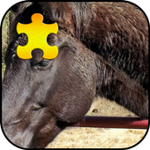 Black Horse Jigsaw Puzzles Game 1