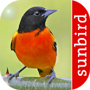 Bird Id North America v2