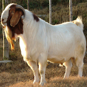 Goat Farming(बकरी पालन): Goat Buy,Sell,Vaccination 1.2