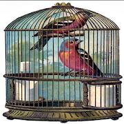 Bird cage 1.0