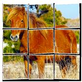 Pony Jigsaw Puzzle (FREE) 1.2