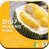 Benefits Of Durian 1.0