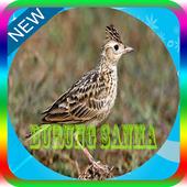 Kicau Burung Sanma Master Mp3 Offline 1.0