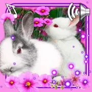 Funny Bunnies live wallpaper 1.10
