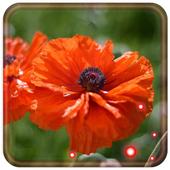 Poppy Red LWP 1.4