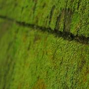 苔 緑色のコケ 壁紙  無料版FREEフリー 1.5
