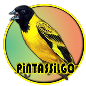 Pintassilgo Campeao De Canto 1.0