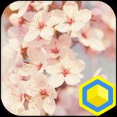 Cherry Blossoms - 카카오홈 테마 2.0