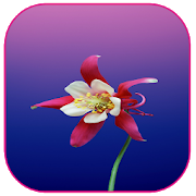 Spring Flowers Wallpapers 1.0