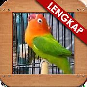 Masteran Loverbird Kusumo 1.2
