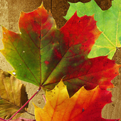 Kid Puzzle: Falling Leaves 1.1.2
