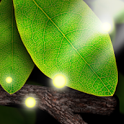 Tap leaves live wallpaper 201 apk download android tap leaves live wallpaper 201 voltagebd Gallery
