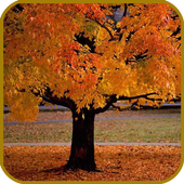 Autumn Foliage Live Wallpaper 1.1