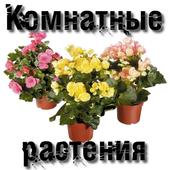 Комнатные растения 3.0