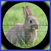Rabbit Hunter 3.3