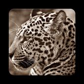 Jaguar Wallpaper HD 1.0