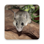Mouse Wallpaper HD 1.0