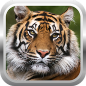 African Tiger Shooter 3D 3.0