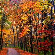 Autumn Park Live Wallpaper 1.0
