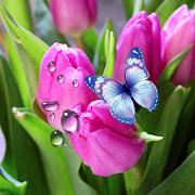 Tulips Live Wallpaper 1.0.4