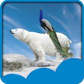Peacock Live Wallpapers 1.6