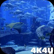4K Aquarium Tank Video Live Wallpaper 1.1