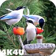 4K Garden Birds Video Live Wallpaper 1.5