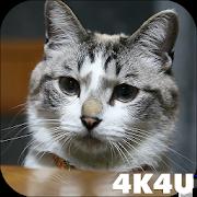 4K Cute Cat Video Live Wallpaper 1.1