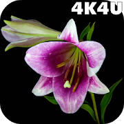 4K Flowers Video Live Wallpaper 1.1
