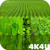 4K Green Colored Stylish Video Live Wallpaper 1.1
