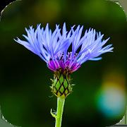 Blur Image - DSLR focus effect 1.18