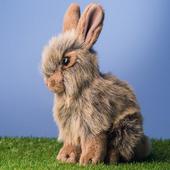 كيف تصبح مربي ارانب ناجح 1.0