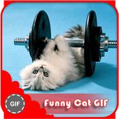 Funny Cat GIF 1.2