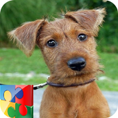 Dog Puzzle - Terrier 1.0