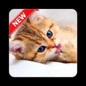 Kitten Wallpapers HD 1.0.0