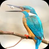 Suara Burung Tengkek Buto 2.0