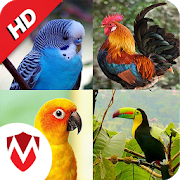 com.mickyappz.birdsounds icon